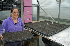 Planting Starts in the Greenhouse